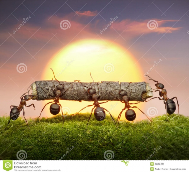 team-ants-carry-log-sunset-teamwork-concept-23592224